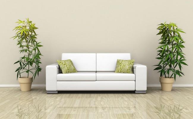 Sofa with plants